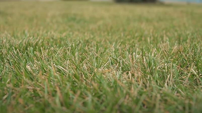 Рулонный газон на территории ЖК Мелодия